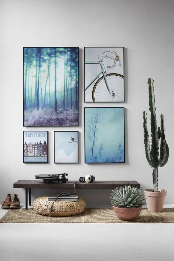 pictures-cactus